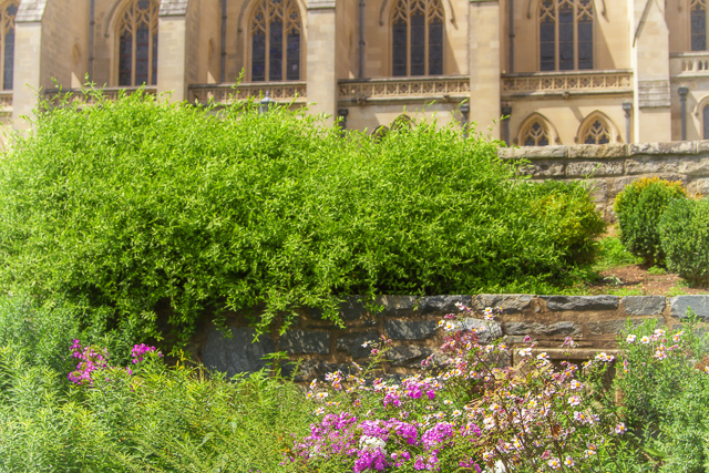 2017, June 24: Flower and Garden Photography at the National Cathedral