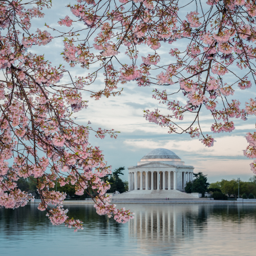 2017, March 18: Cherry Blossoms At The Tidal Basin Photo Shoot