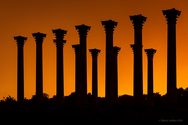 Moonset and Sunrise Over Capitol Columns At National Arboretum