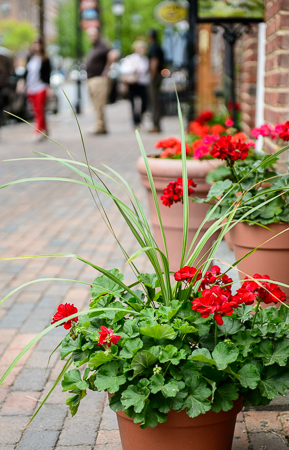 Fieldwork - Photography Basics in Old Town Alexandria