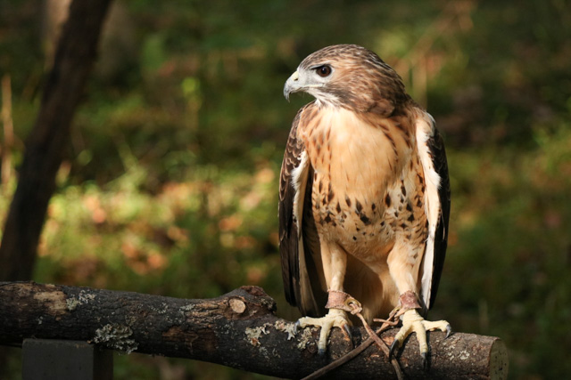 Birds of Prey and Critters -Karisha Kuypers