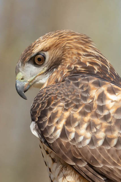 Birds of Prey and Wildlife Critters Field Shoot-David Ponder