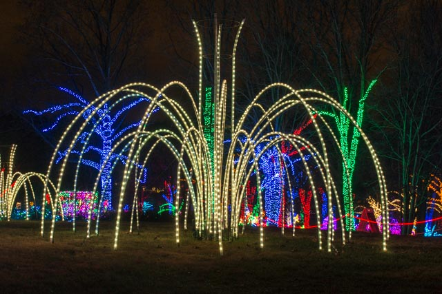 Meadowlark's Winter Walk of Lights-Edward Cragg