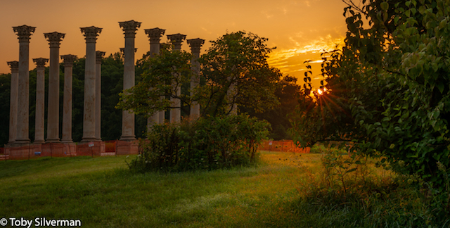 Moonset and Sunrise Over Capitol Columns at National Arboretum-Toby Silverman