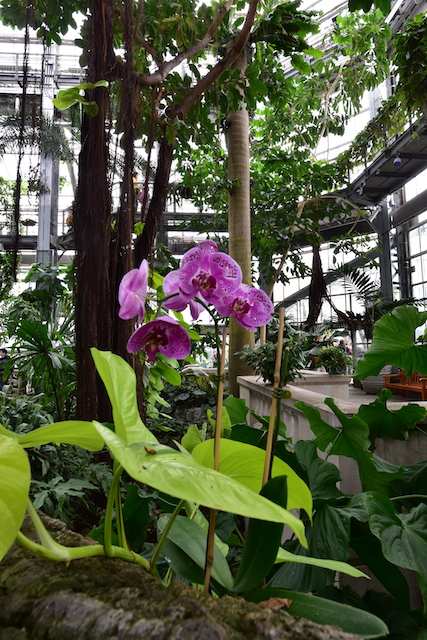 Fieldwork - Photography Basics at the U.S. Botanical Gardens-Patricia Tuccio
