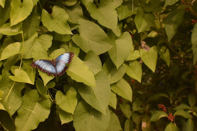 Butterflies at Brookside Gardens-Jesse Lambert