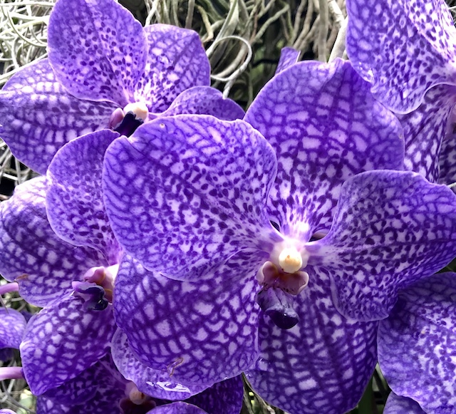 Longwood Gardens Orchids-Karen James