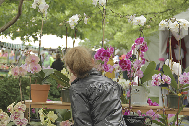Fair and Festival Photography- Flower Mart-Anna Kuipers