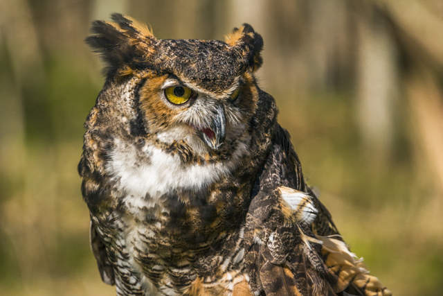 Birds of Prey and Wildlife Critters-Gary Stanley