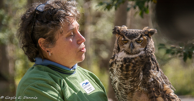 Birds of Prey and Wildlife Critters-Gayle Dennis