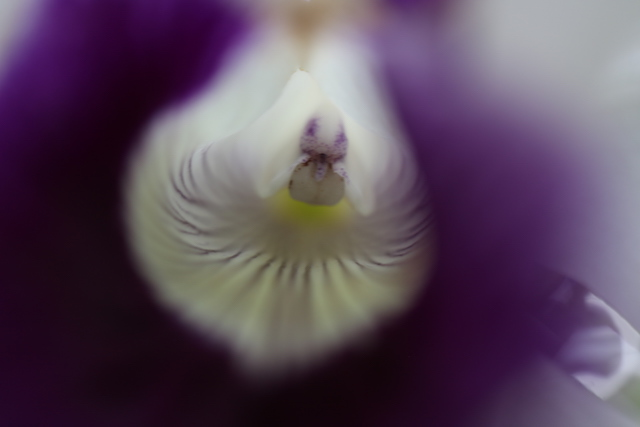 Getting Started in Macro Photography-Paola Novara