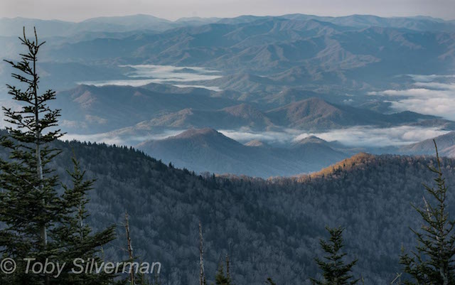 Smokies Workshop -Toby Silverman